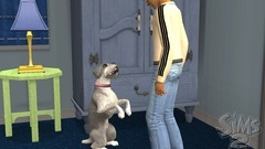 Die Sims 2: Haustiere Screenshot # 22